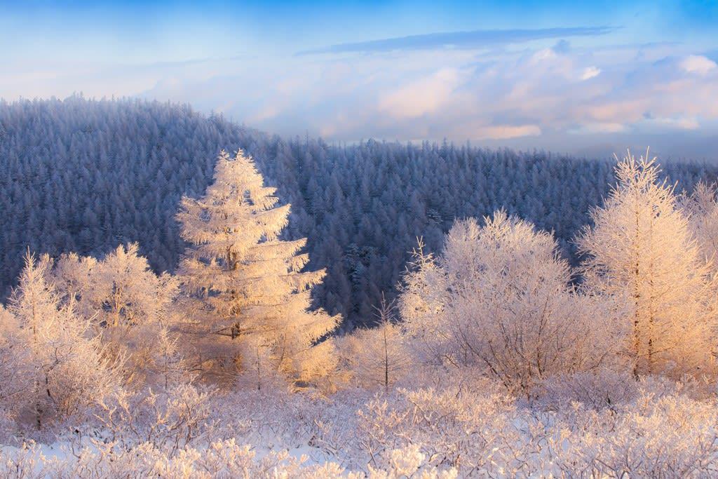 美ヶ原の霧氷の写真