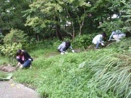 園路の草取り2