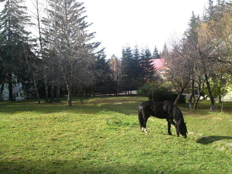 131103_horse01