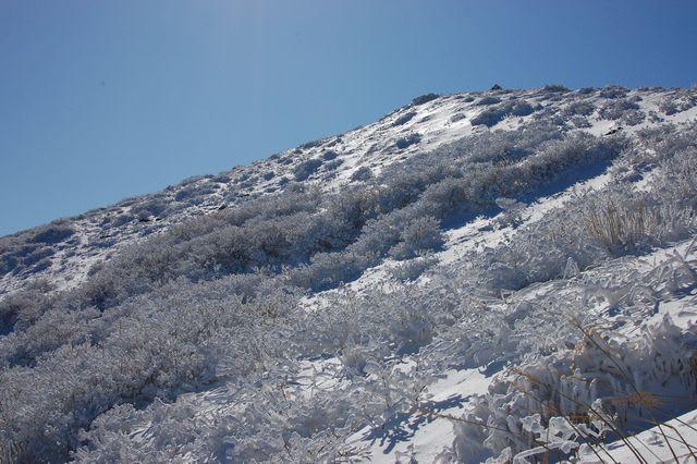 天狗ガ城の霧氷