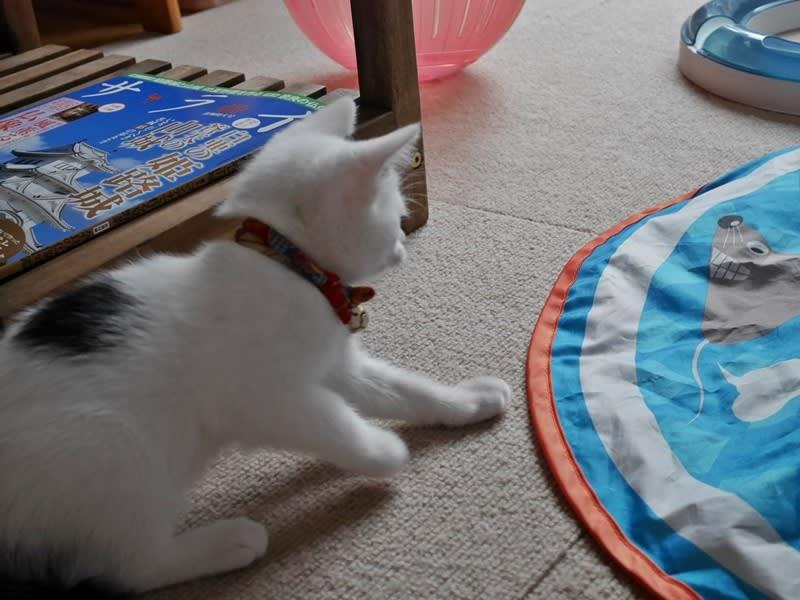 キャッチミー ユーキャンであそぶ子猫ちゃん