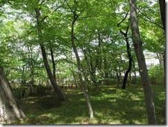 (1)新緑に萌える境山野緑地