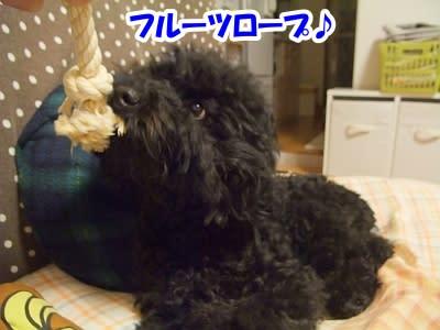 https://blogimg.goo.ne.jp/user_image/0d/79/269b26cf948e29a35bb5b983fec71d72.jpg