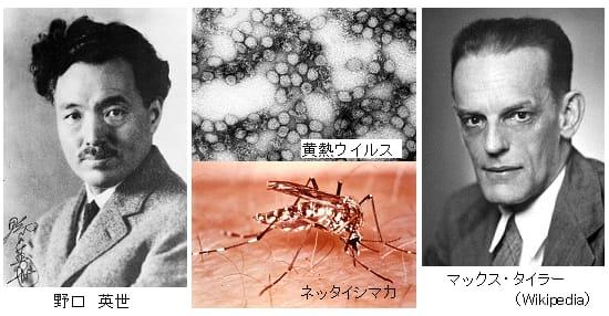 第51回ノーベル生理学・医学賞 ...