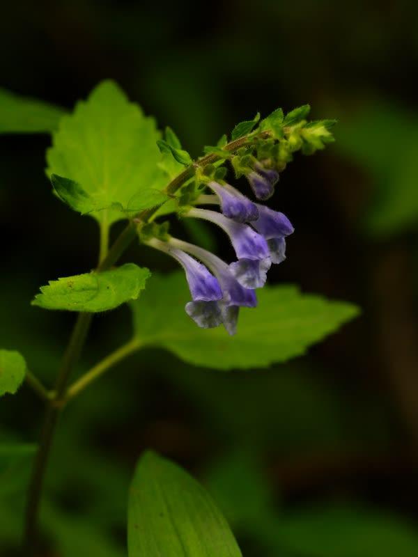 里山の花アルバム