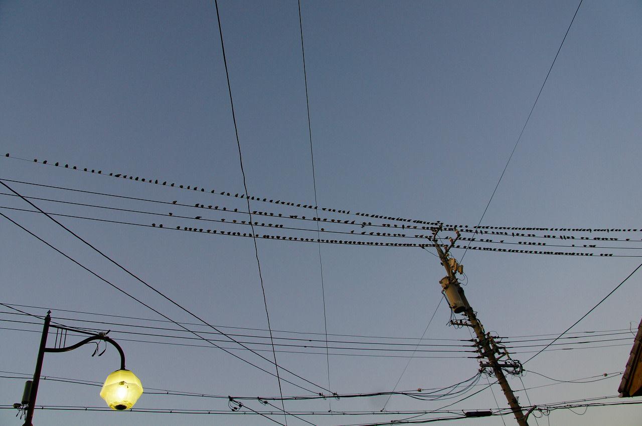 電線に鳥がいっぱいの画像