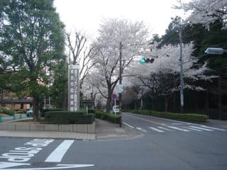 マリアンナ 大学 西部 医科 聖