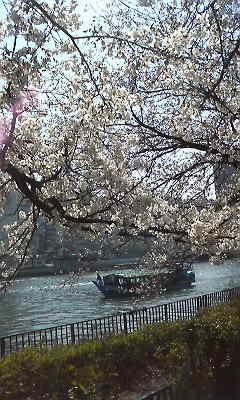 桜、満開です~!