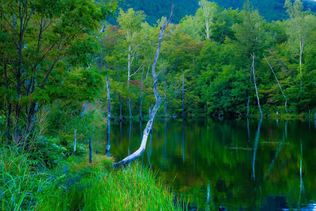 まいめの池