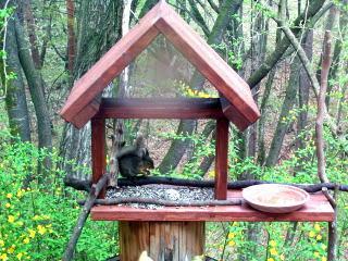小鳥の餌台の簡単な手作り方法や作り方・DIY・レ …