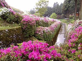 京都の三室戸寺に来ています。