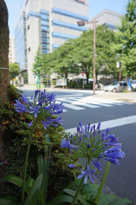 Tokyo130721