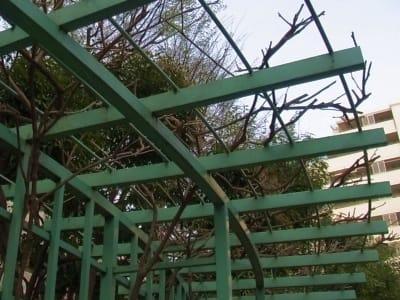曲線型の藤棚