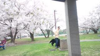 雪窓公園の垂れ桜