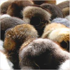 「毛皮の装いは残酷ですか? ←この記事どう」の質問画像