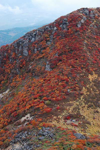 三俣山北峰の紅葉
