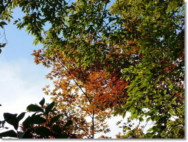 葛原岡神社駐車場の紅葉