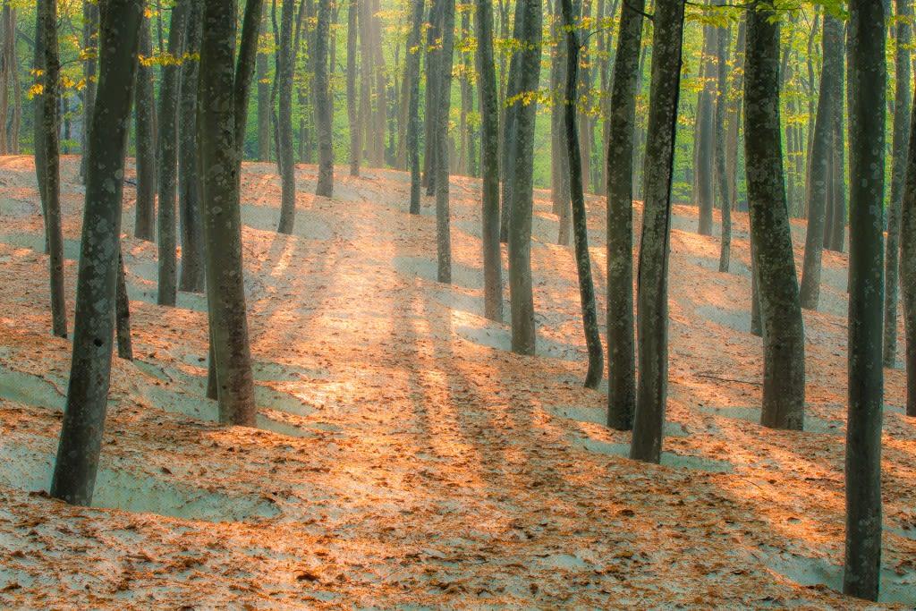 美人林の写真
