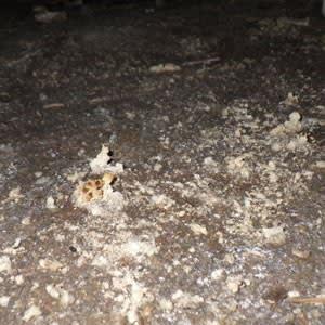 土にカビが繁殖しているようす
