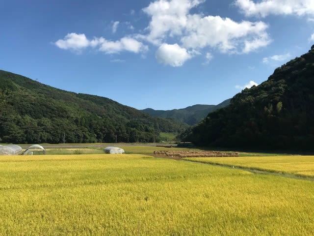 雪浦の美しい秋景色 あんばんね農園の稲刈り