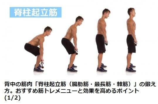 背中 トレーニング ダンベル