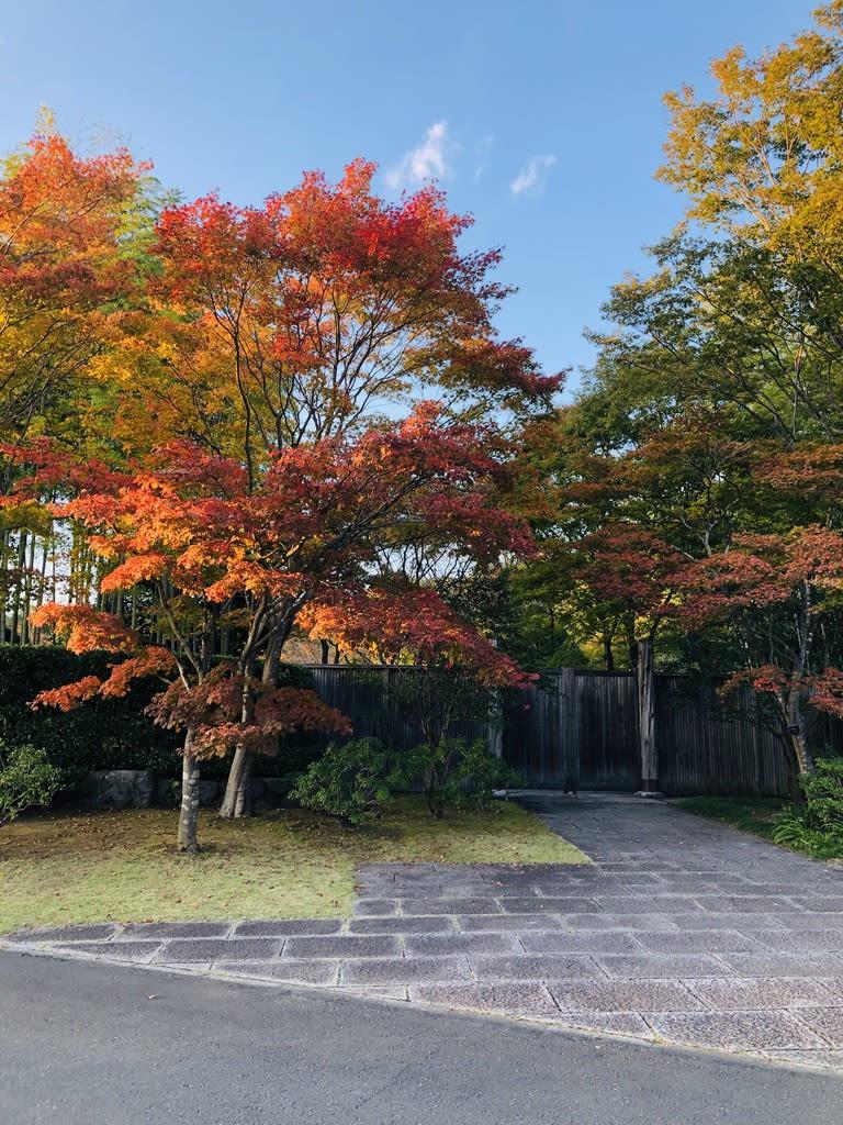 梅野哲の日常ブログ~ドライブ編『昭和記念公園』編~