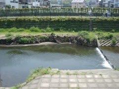 鴨や亀さんの他に鯉も泳いでいました。
