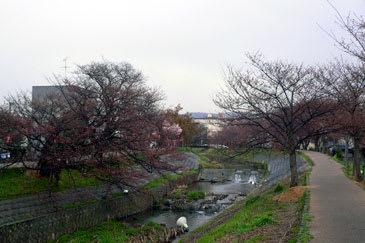 Sahokawa