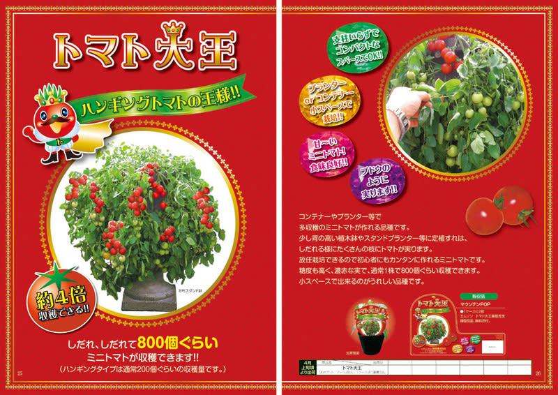 Tomato_king12s1