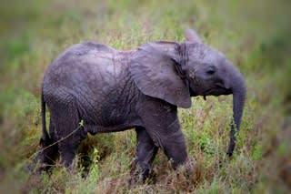 Serengeti…。