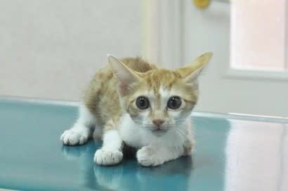 手術、無事に終わりました&子猫達の里親募集
