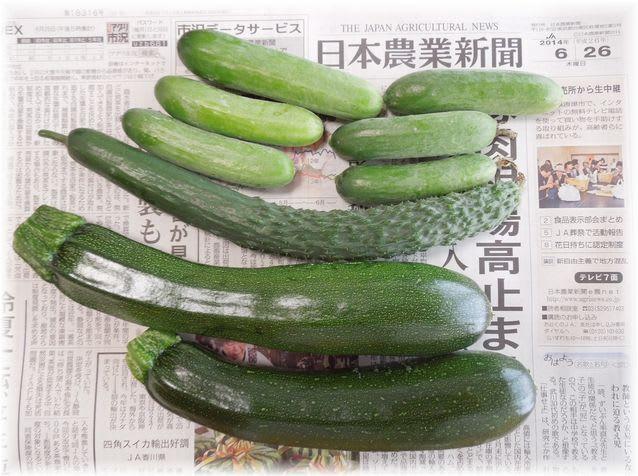 採れたて野菜 2014年6月28日