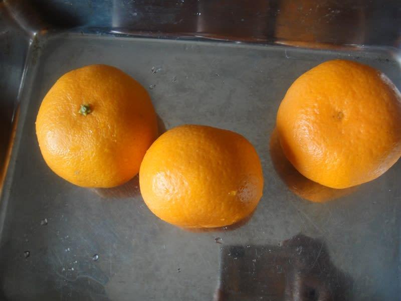 2011/04/10柑橘KIP