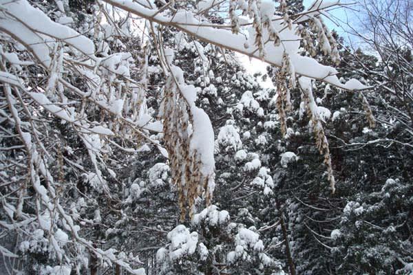 に よう 降りしきる 積もる 雪が
