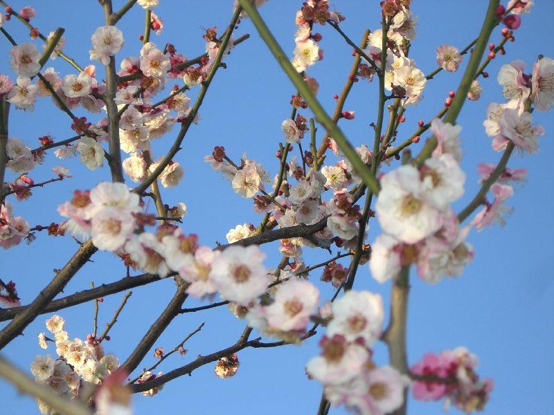 薄桃色の花が、かわいい