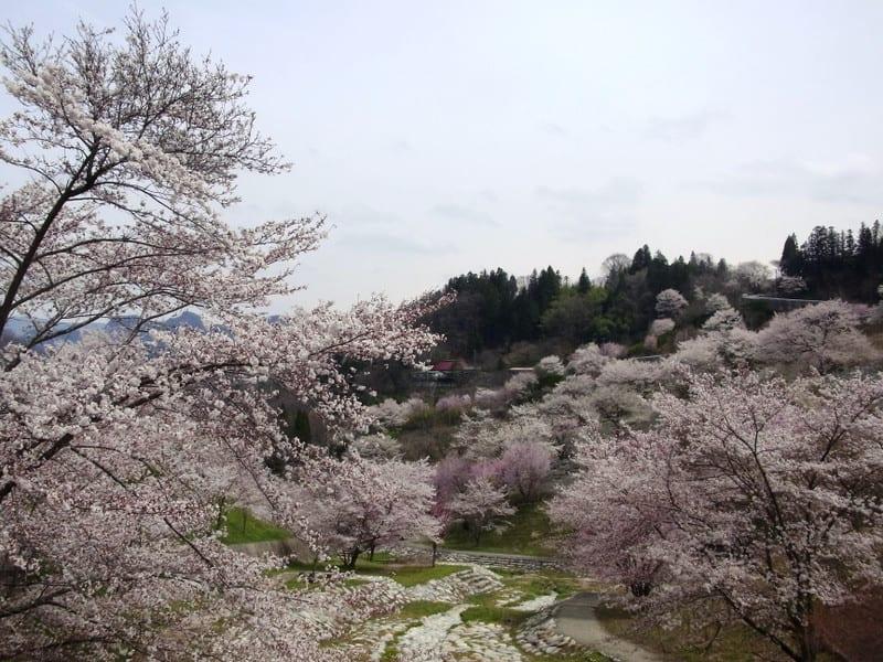 Rikugouyamasakurakinkei320140420