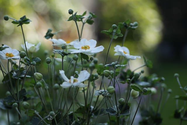 秋を待ちわびていた植物たち
