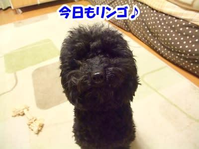 https://blogimg.goo.ne.jp/user_image/12/e5/5074533e7cc16a8931b0b06f5aef14ad.jpg