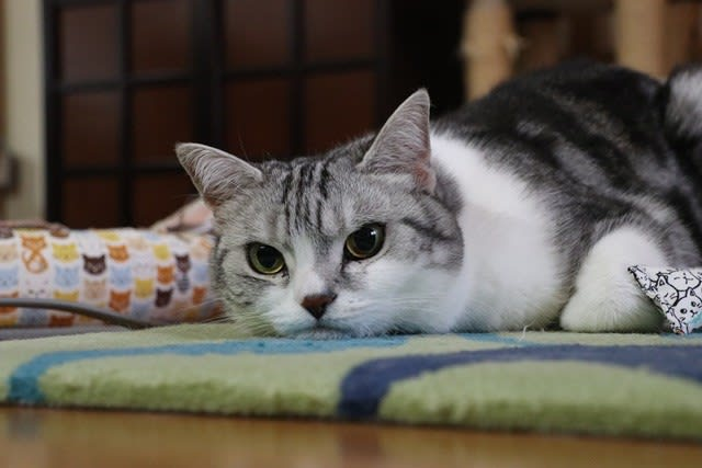 ふてくされる猫~☆