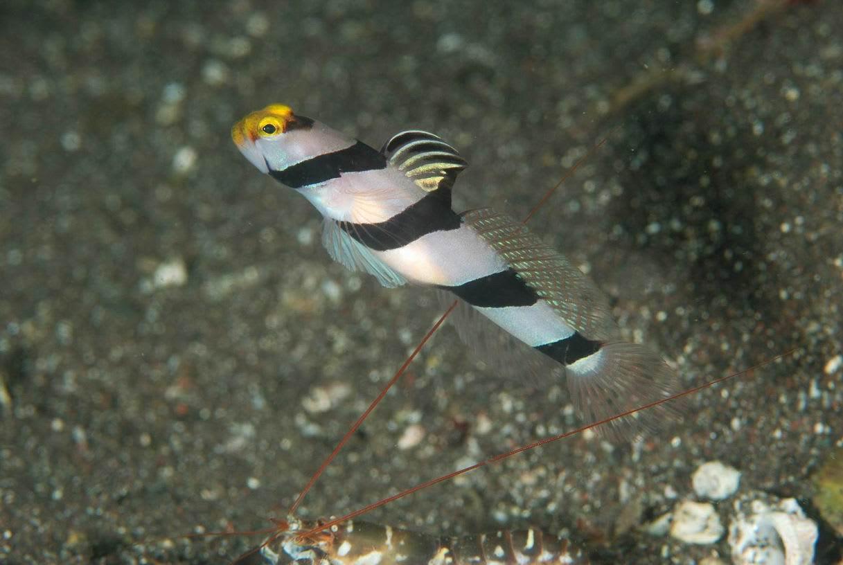 ネジリンボウ - 海の生き物達