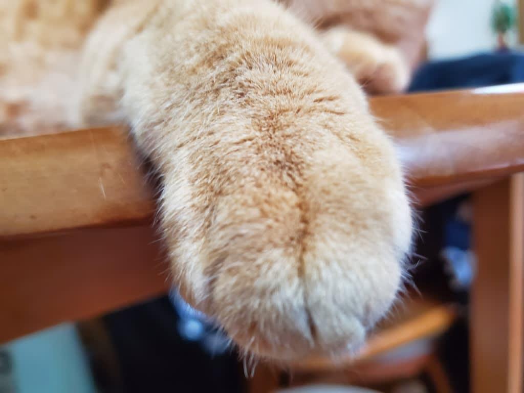 も 借り の たい 猫 手