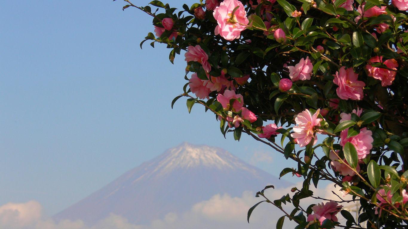花と富士山 かりがね堤 パソコンときめき応援団 壁紙写真館
