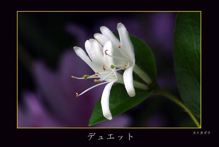 20100515_2