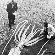 「大きいことは良いことだ!巨大生物ロマン 」の質問画像