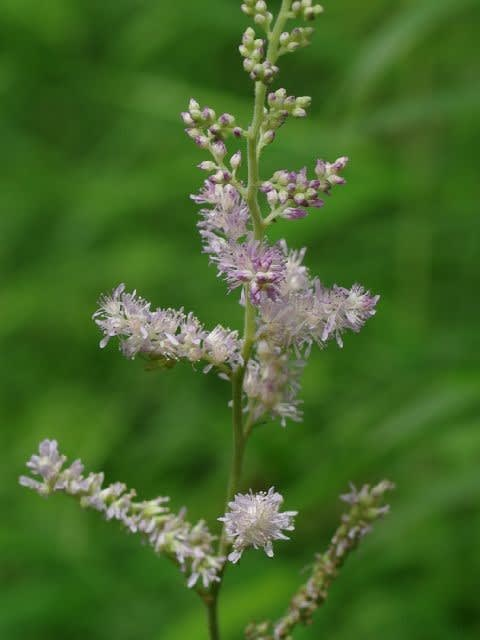 Kurumatabiskyの 野に咲く花に魅せられて Part1