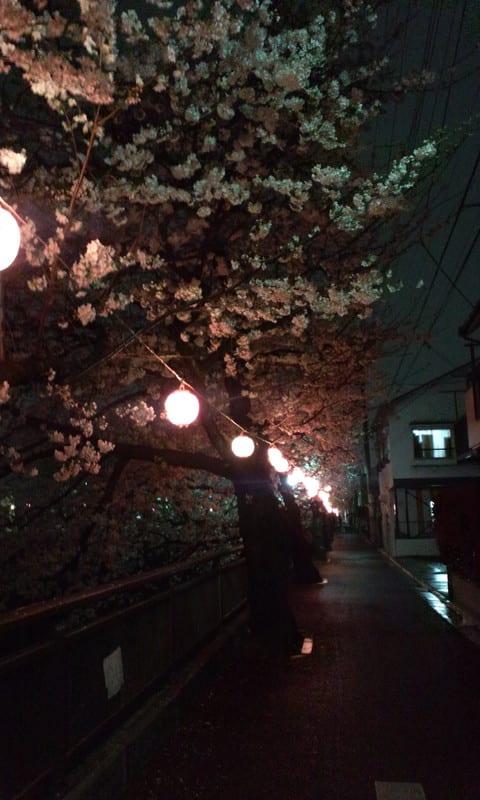 130325_shakujiigawa_sakura