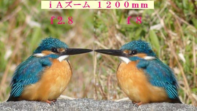フリー素材 : 野鳥 ・ 翡翠 於大公園のカワセミ FZ300の欠点はF8 ...