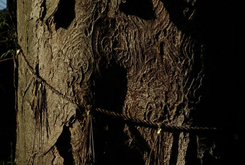西大寺のケヤキ幹