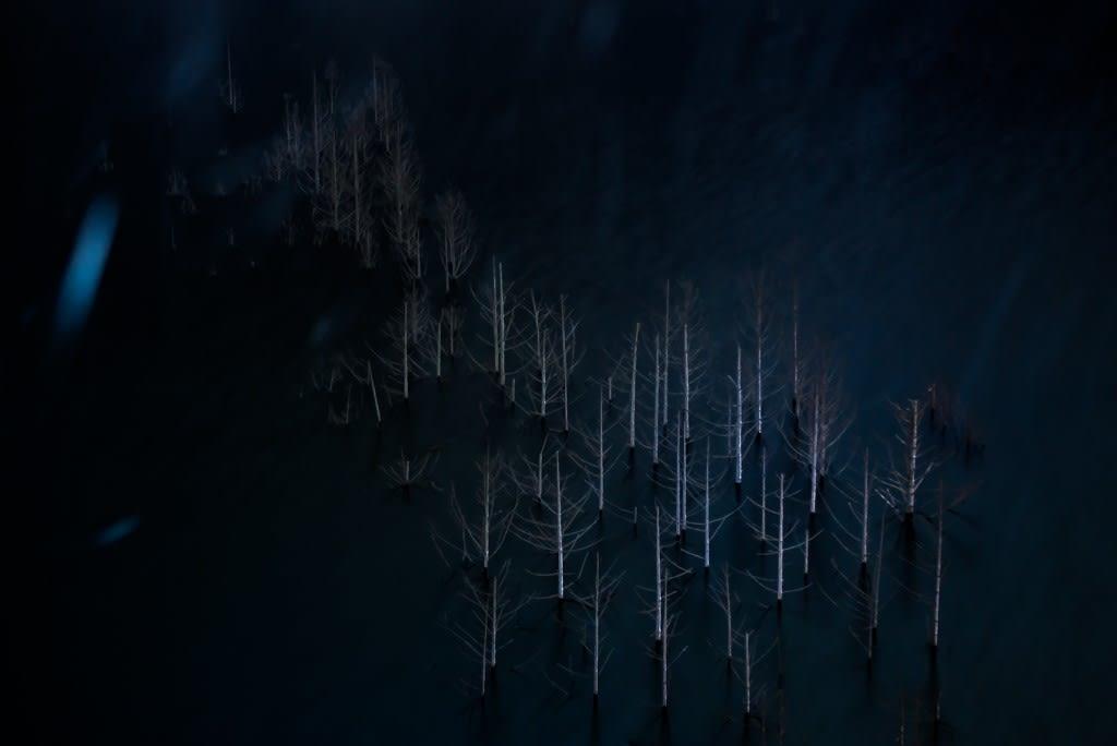 湯西川湖の水没林の写真