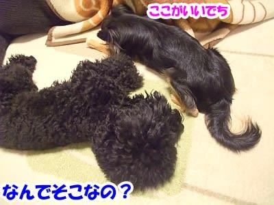https://blogimg.goo.ne.jp/user_image/14/b1/13703f3d76ceb1afd6c0a953c5be93db.jpg